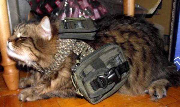 swat_cat_2