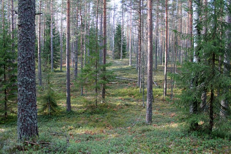 лес5.jpg