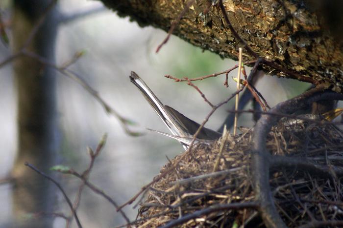 гнездо.jpg