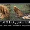 1362638113_prikoly-k-8-marta-22