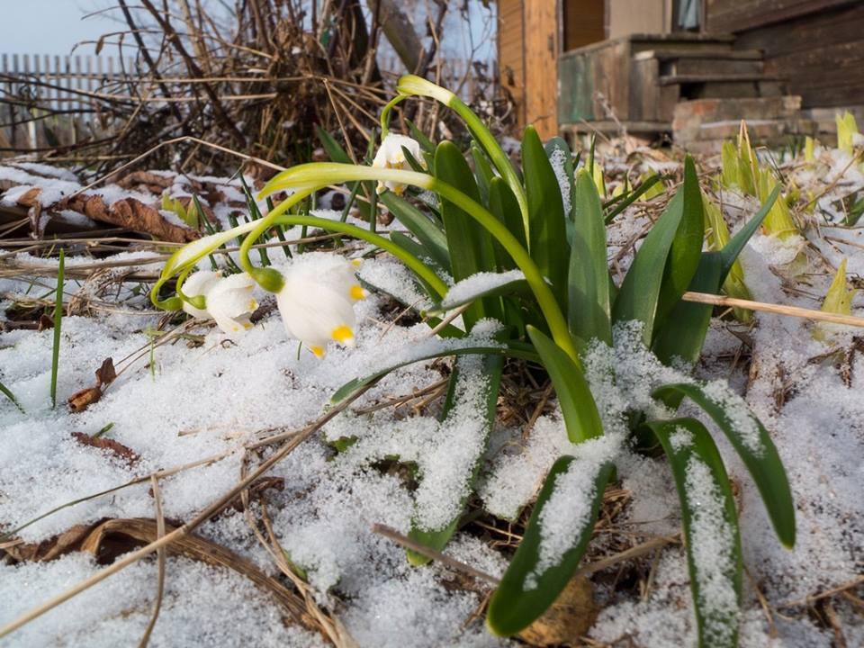 апрель снег