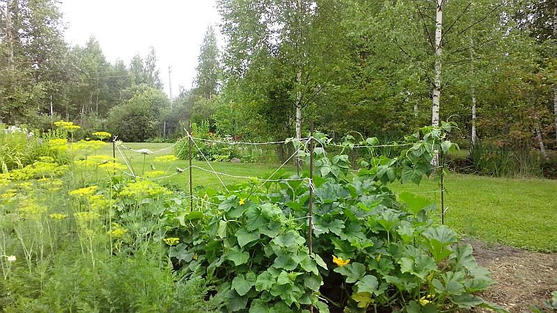 огород2