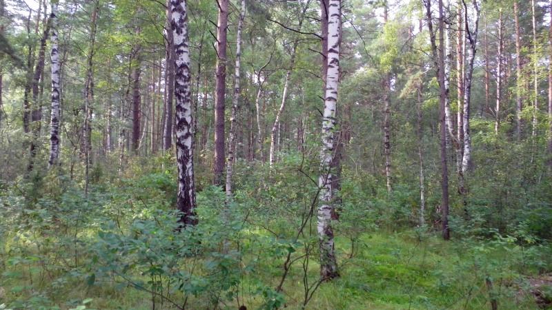 лес3_1