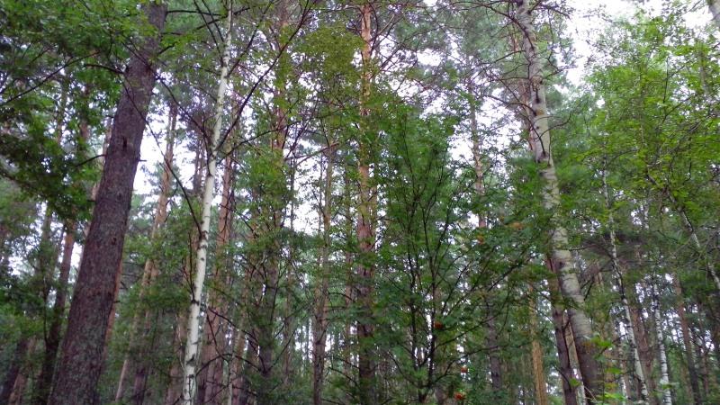 лес5_1