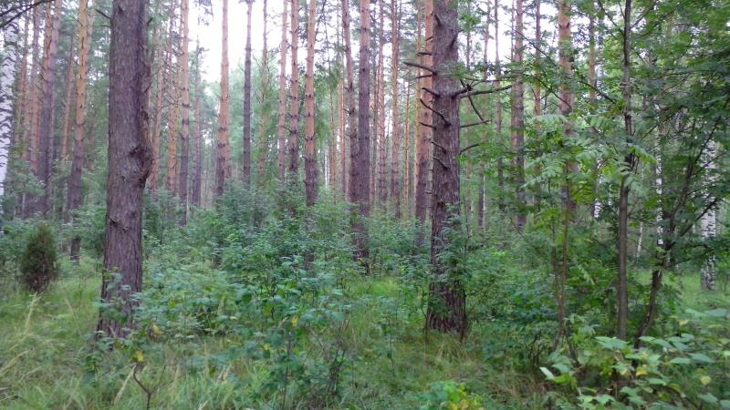 лес6_1