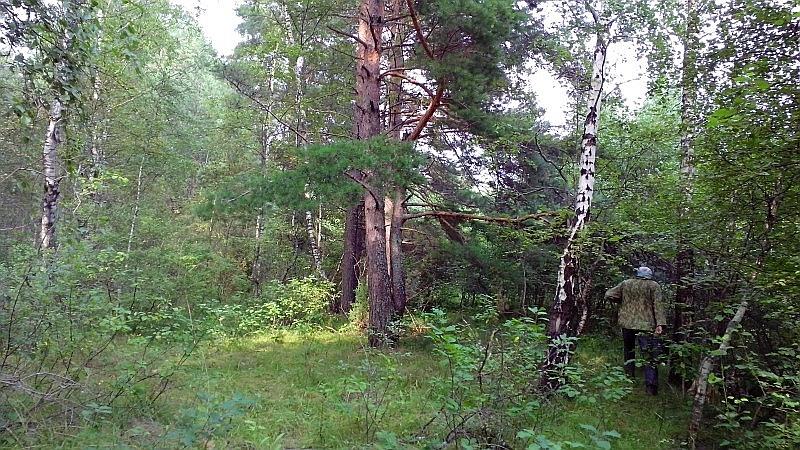 лес2-2