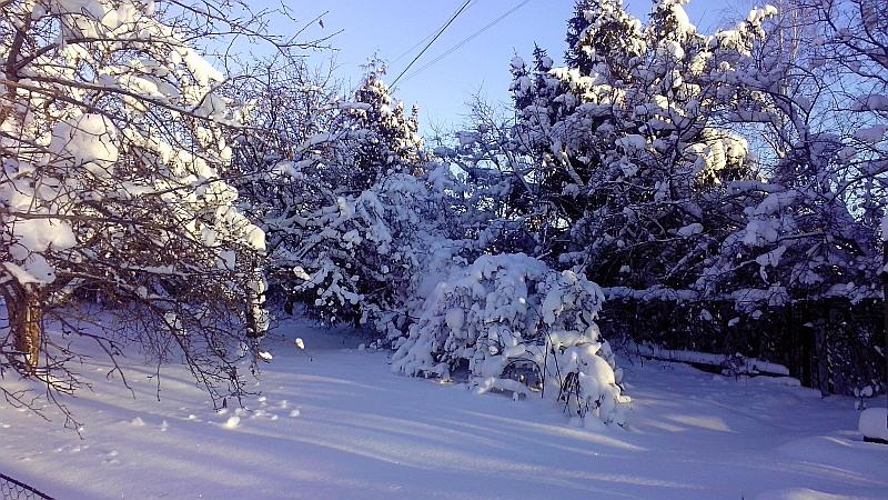 снег_в саду1