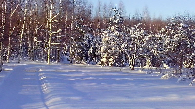 снег_в_саду2