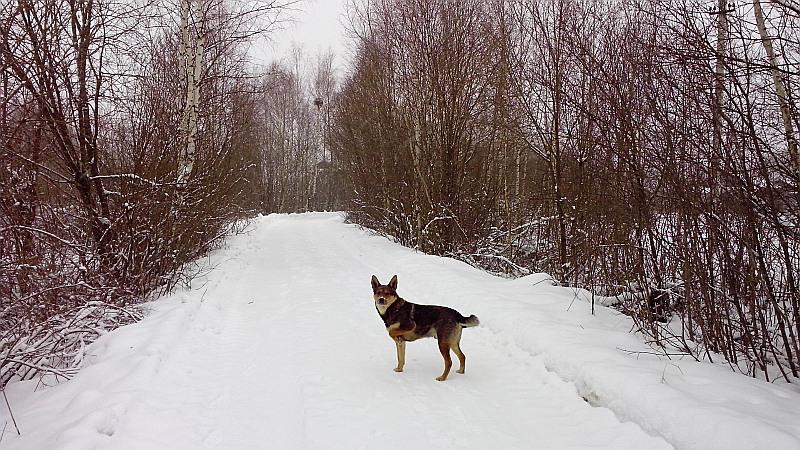 о_собака