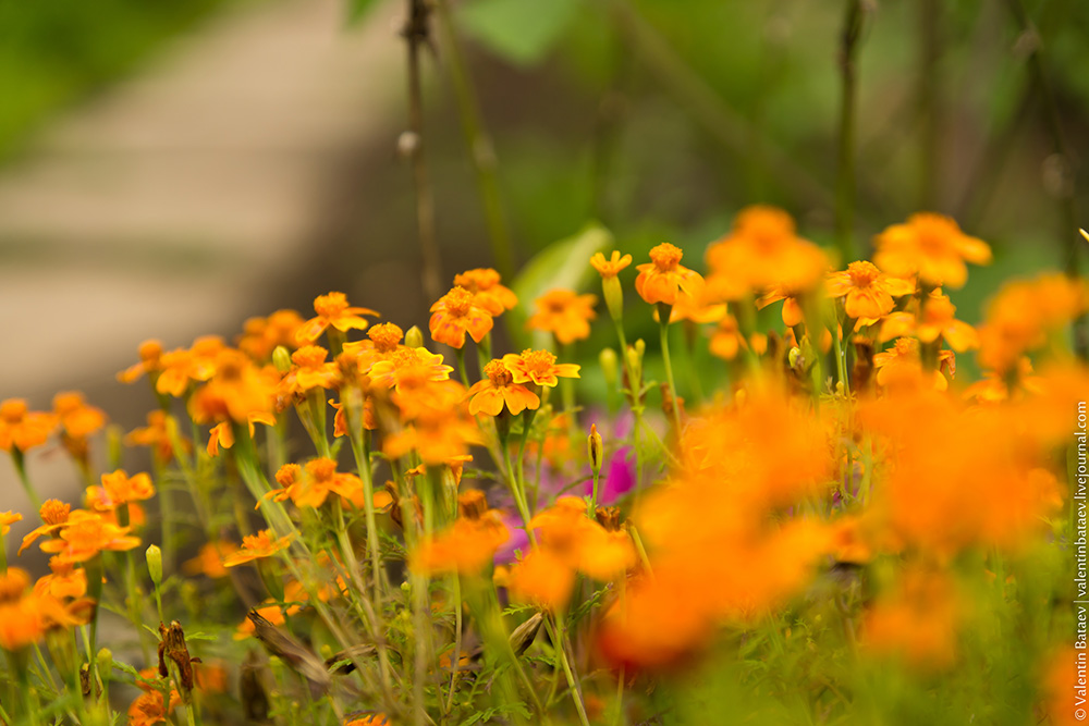 картинки на рабочий стол август цветы № 409652  скачать