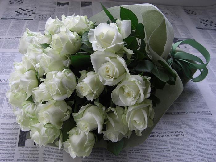 белые розы1