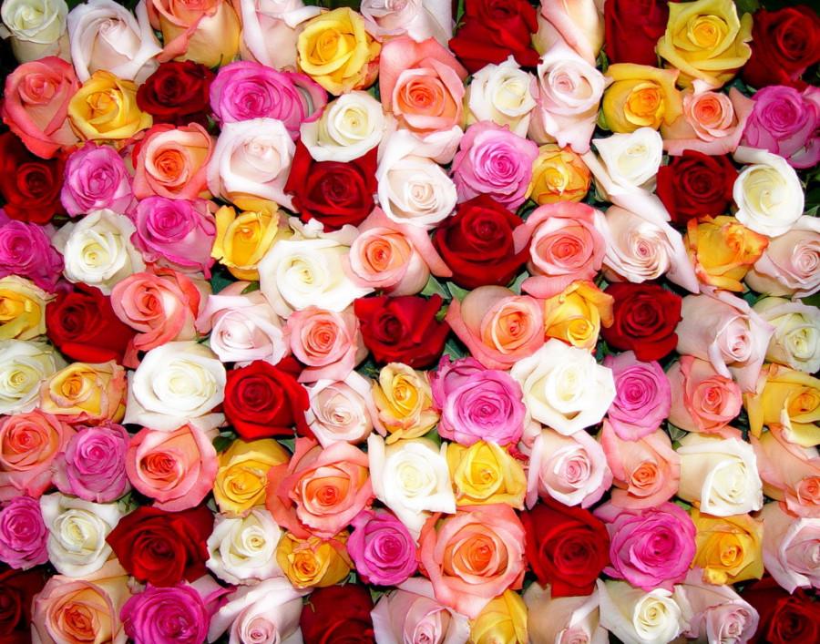 розы много