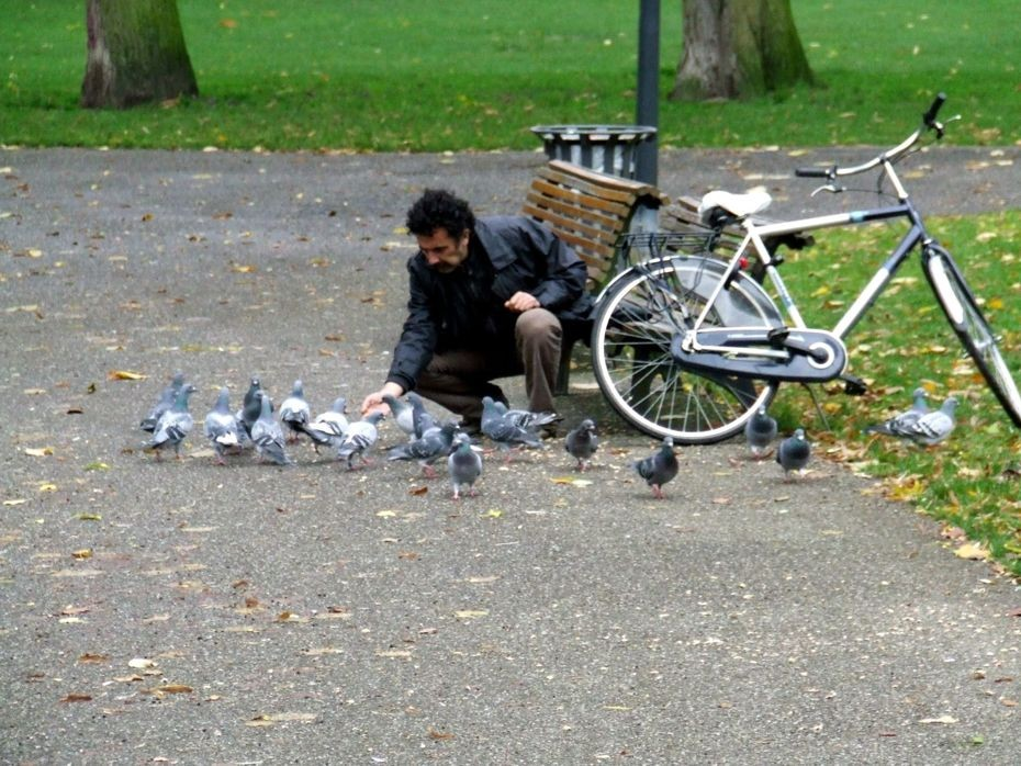 Стих кормить голубей