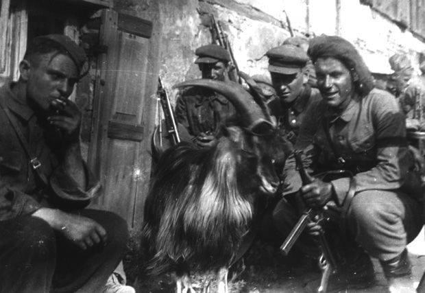 Партизанский козел - участник военного парада