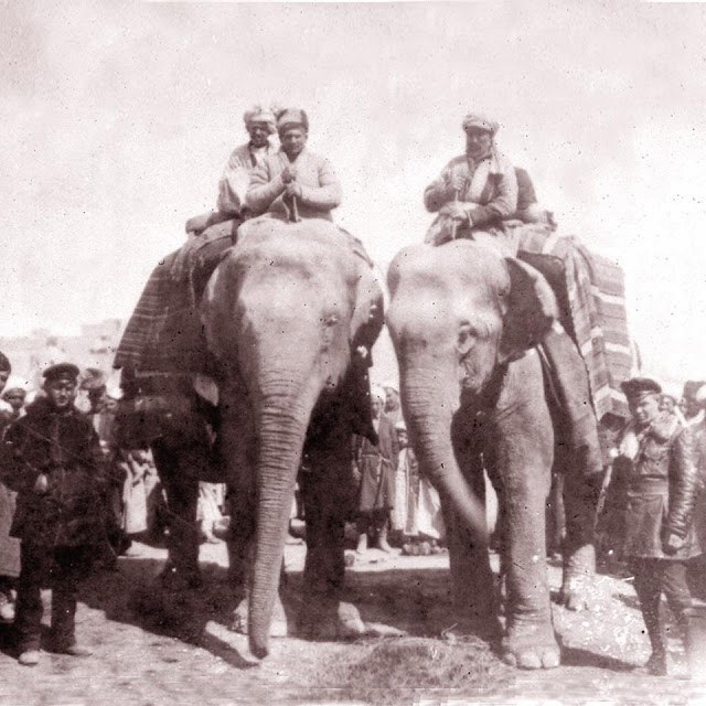 Trophy elephants for the Red Army. Where do without them in Central Asia, Central, case, time, then, Bukhara, assault, operation, use, only, Frunze, assault, Army, Red, side, revealed, interesting, elephant, held, class, Bukhara