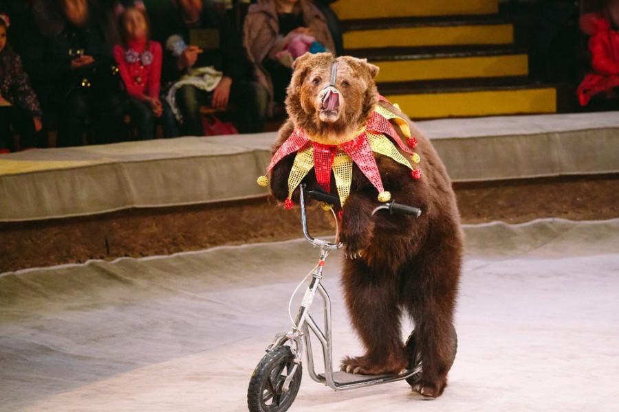 «Цирк уехал, а клоуны остались». Депутат предложил не пускать в цирки детей