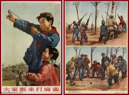 Нелепый Китай. Зачем там выпилили почти всех воробьев, а потом покупали их в России