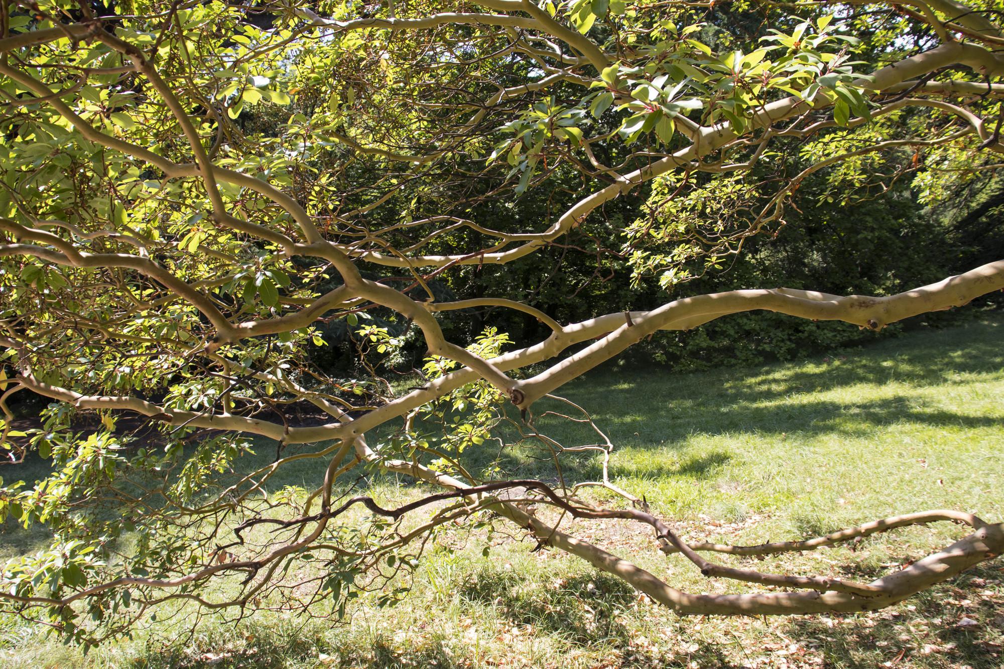 Дерево, которое боится человека