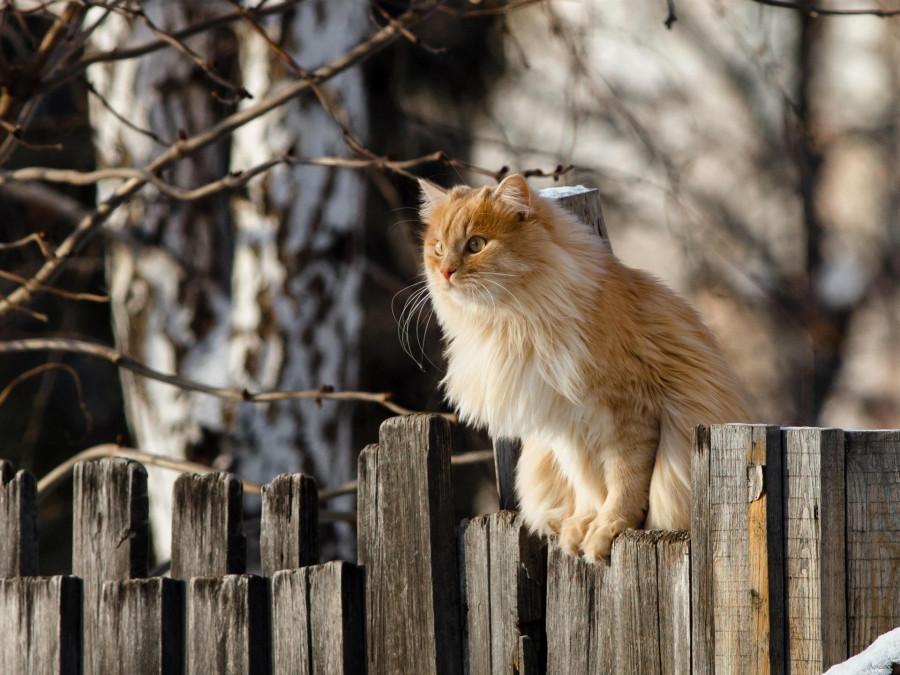 Дорогущие древнерусские котики