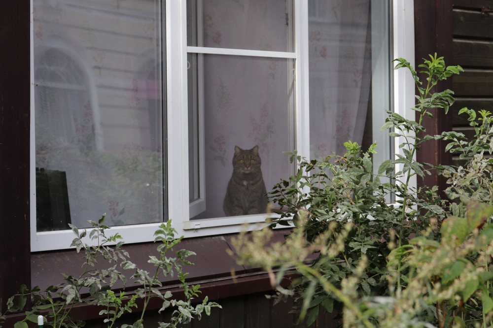 Кстати, с котейкой в окне поздоровайтесь 😀