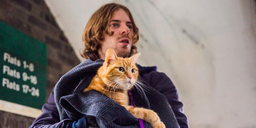 Фильм рыжий кот боб