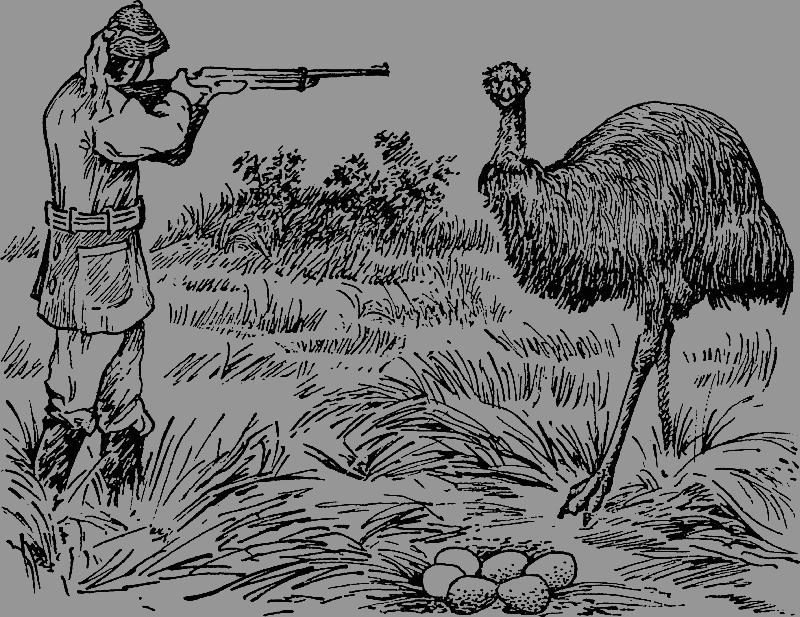 Как австралийская армия проиграла войну страусам