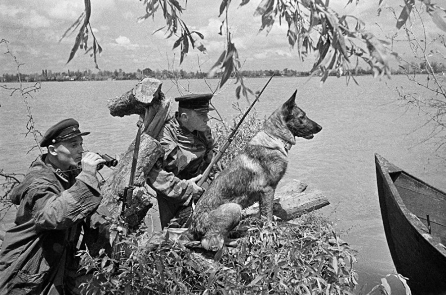 150 советских пограничных псов против немецких автоматчиков