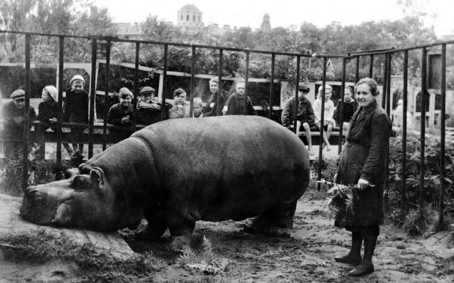 Бегемот из блокадного зоопарка