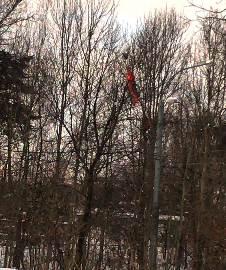 Сезон парашютистов на деревьях