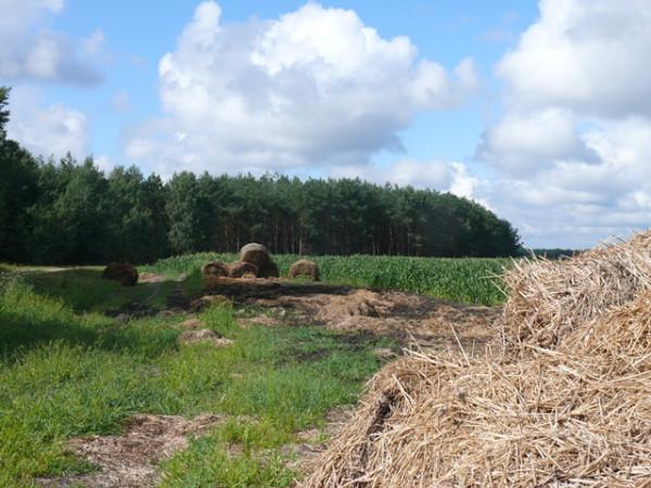 Лес-солома-кукуруза
