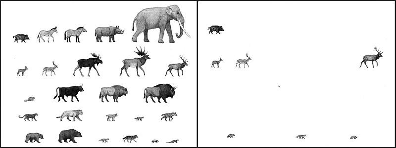 Наглядная иллюстрация масштабов истребления животных. В верхней части рисунка плейстоценовая фауна Центральной Европы в период межледниковья (климатически соответствует современной эпохе)