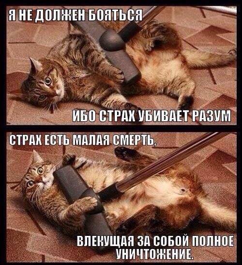 день российской как побовоть чувство вины когда отдаешь кота диеты, сельдерей