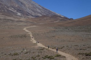 Дорога на Килиманджаро. Высота 4300 м.