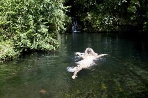 Озеро в тропическом лесу. Килиманджаро
