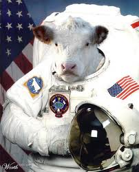 space cow 1