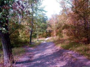 Березовая роща в Воронеже сентябрь