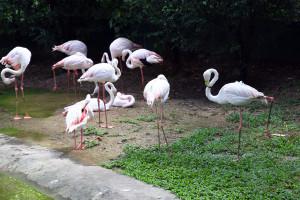 птицы9
