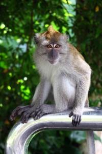 обезьяна2