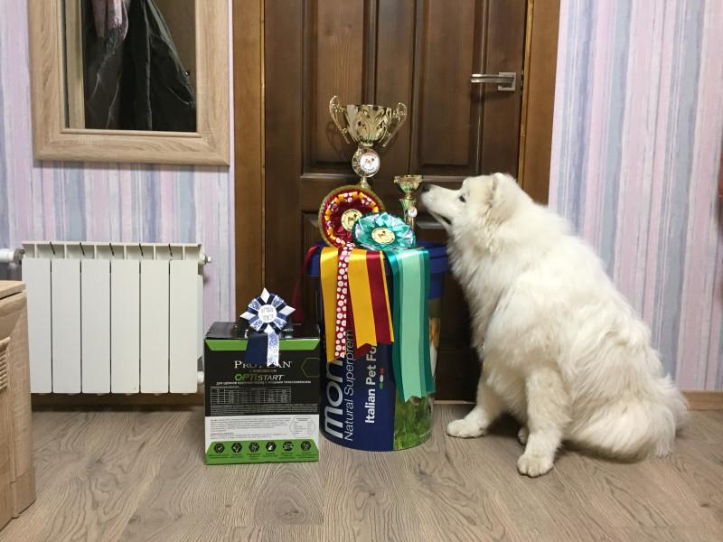 Юный Чемпион России и Юный Чемпион Национального Клуба Породы