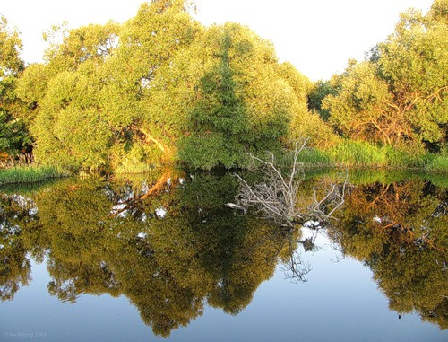 Река Болва в окрестностях Новоалександровского