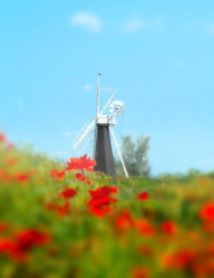 Windmill in summersf