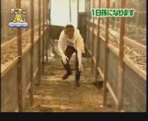 [MAGO MAGO ARASHI][#003] 20050423 - Sho & Ohno (Fattoria di polli) (sub ita).avi_snapshot_17.52_[2013.08.11_16.12.00]