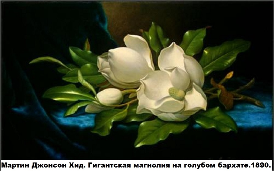 giant-magnolias-on-a-blue-velvet-cloth-1890.jpg!Blog
