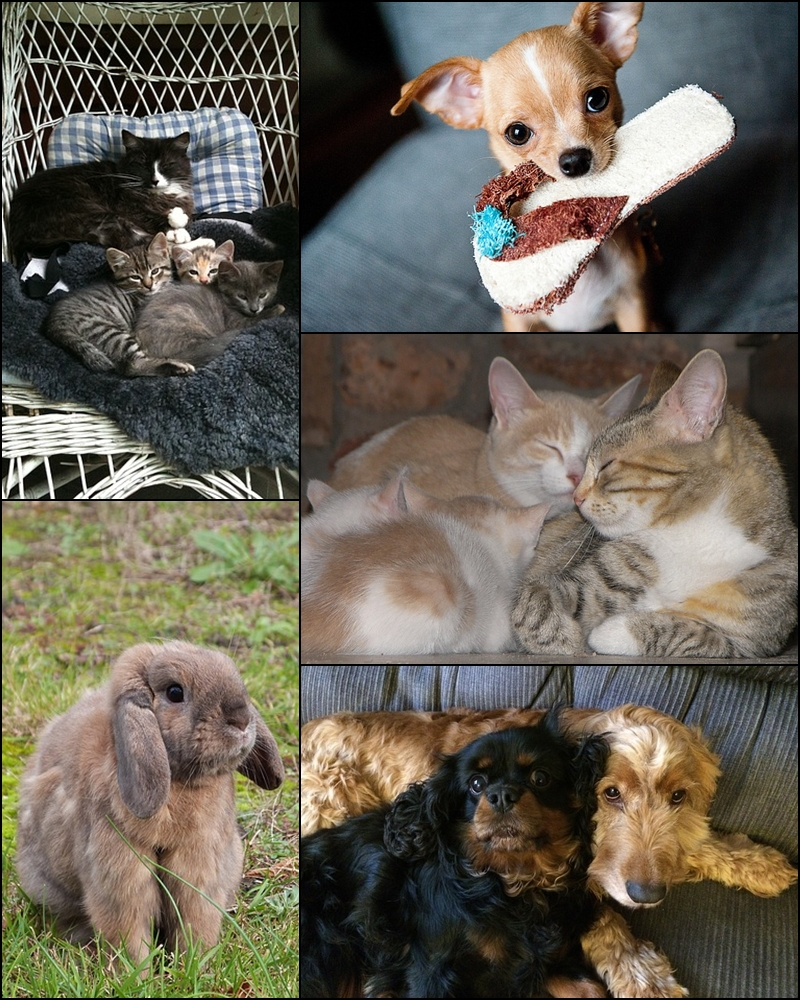Kittens, puppies and a rabbit. Happy Holidays!