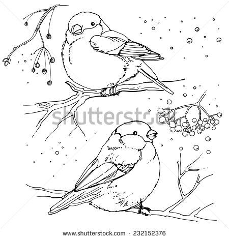 stock-vector-set-of-birds-drawn-line-vector-illustration-winter-birds-232152376