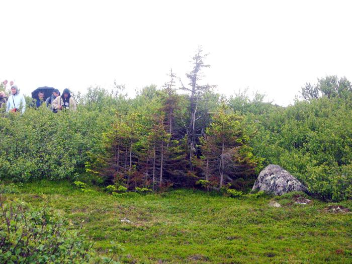 Картинки тундра и лесотундра красота природы