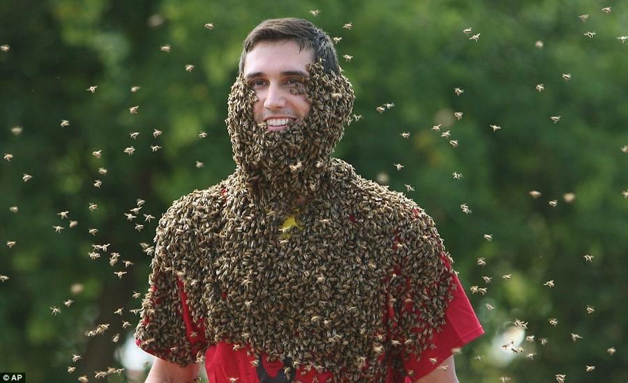 Пчелобородые смельчаки...