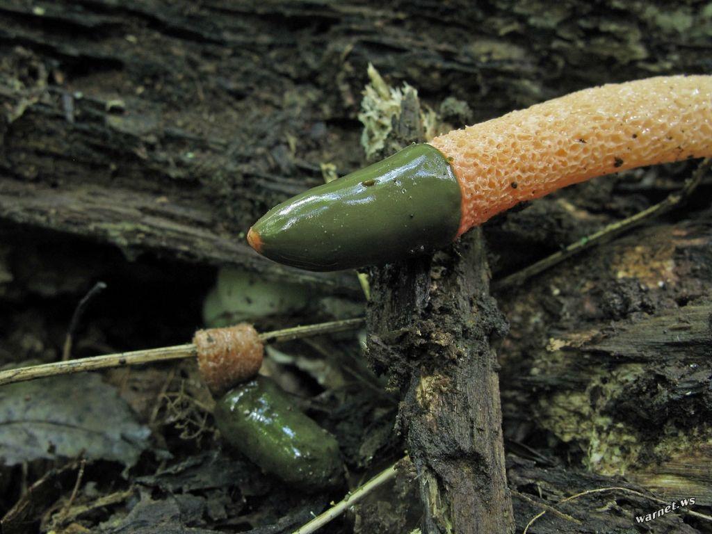 Самый пошлый гриб в мире