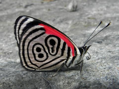 Бабочка с числом 89 на крыльях