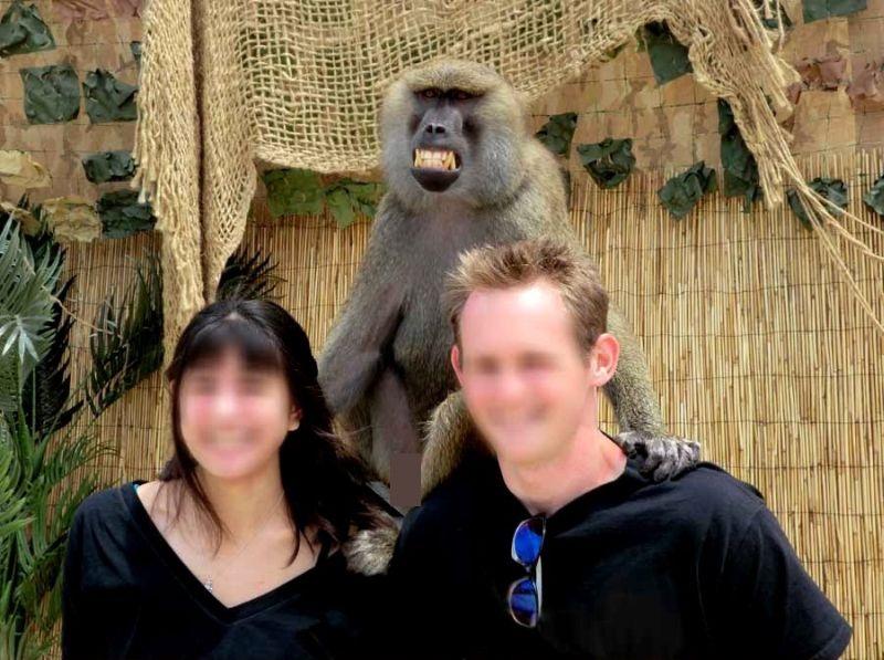 Почему не стоит фотографироваться с обезьянами